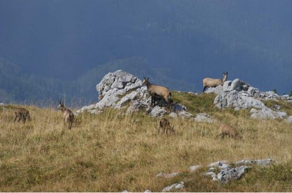 Jagd in Südtirol – Jagen in den Alpen Norditaliens