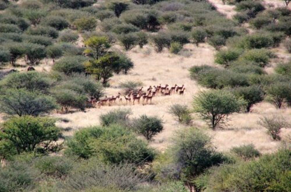 Auf nach Afrika – Mit der Sax auf Jagdreise nach Namibia