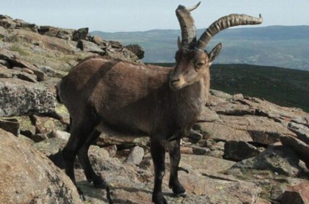 Jagen in Spanien – Die iberische Halbinsel bläst zur Jagd