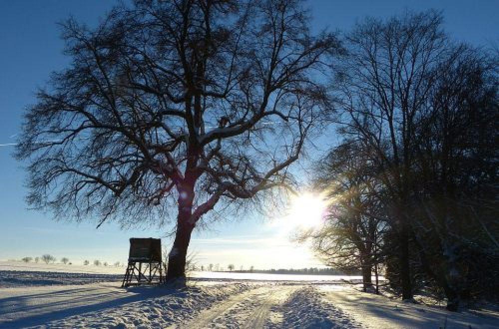 Hegearbeit im winterlichen Niederwildrevier