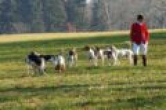 Jagdhunde – ein Blick auf die jüngere Geschichte