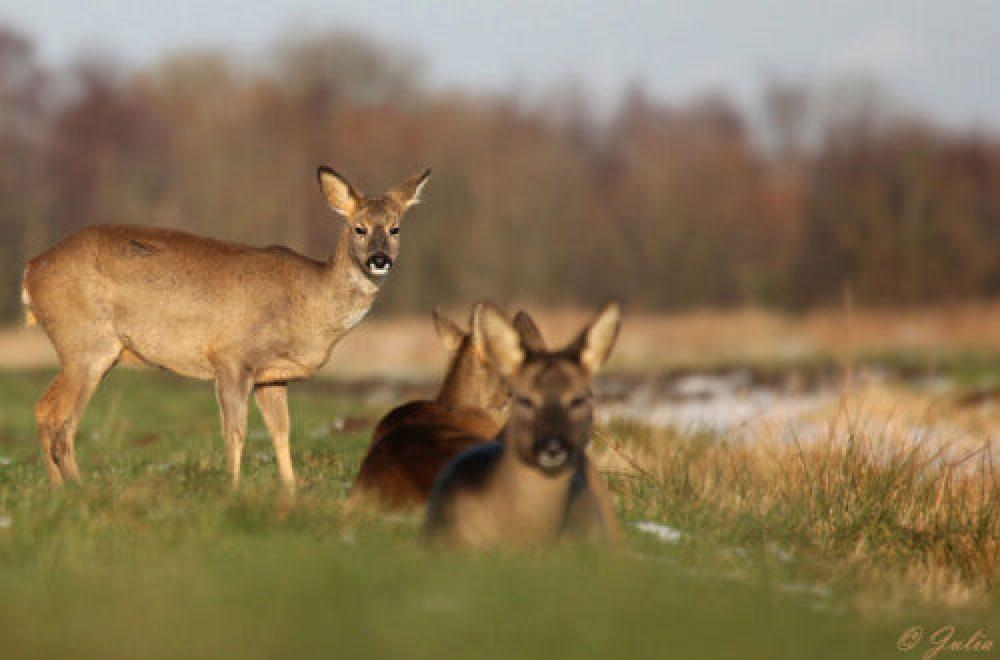 Fragen aus der Jägerprüfung zur Abschussplanung