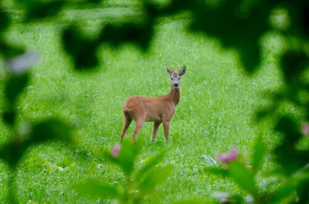 Jagdrevier im März – Lebensraum und Deckung