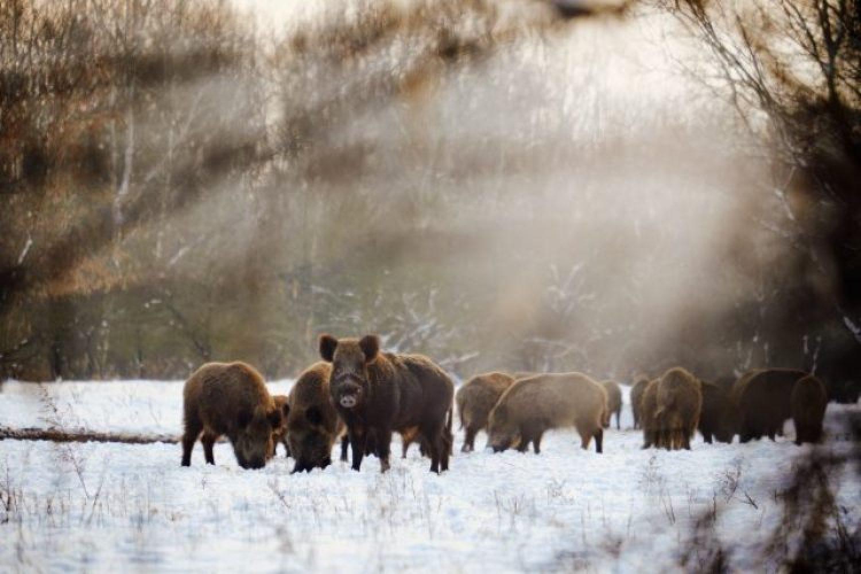 Tiere im Winter – 5 Strategien im Überlebenskampf