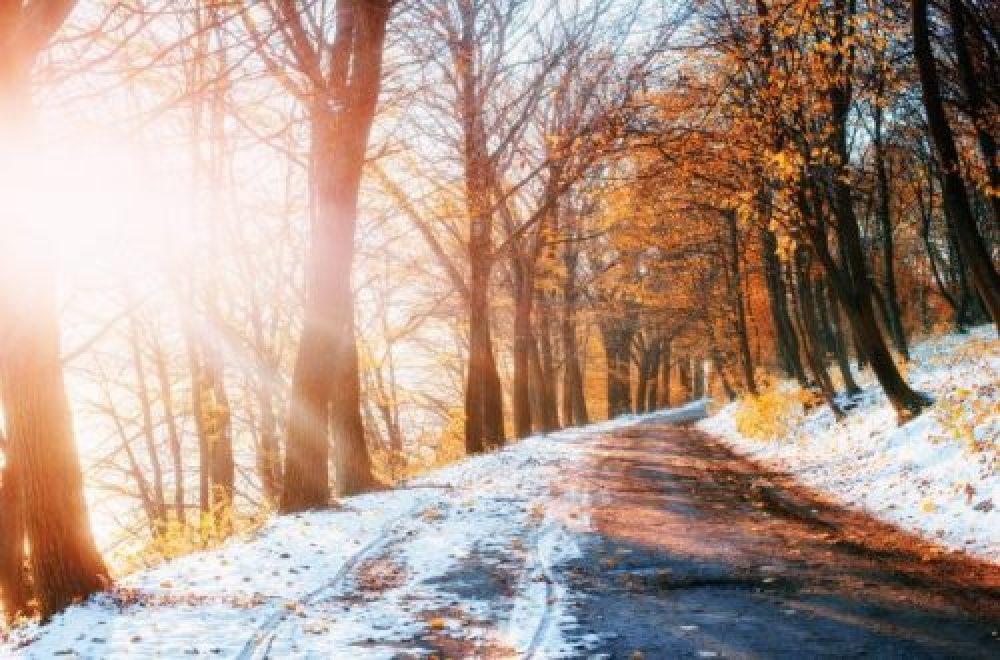 Laubbäume im Winter erkennen