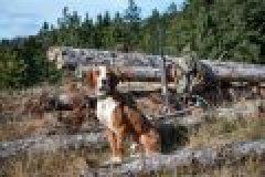 Jagdhunde – Die unverzichtbaren Helfer
