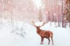 Weihnachtliche Geschenke für den Jäger von Beretta