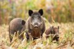 Fragen aus der Jägerprüfung – Haarwild